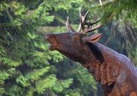 Zvířátková stezka u Moravské boudy