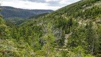 Dřevařská cesta