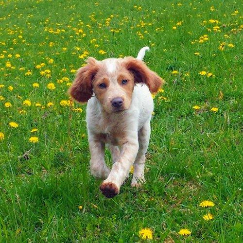12 TIPŮ - Ubytování se psem nebo kočkou - domácími mazlíčky ve Špindlerově Mlýně