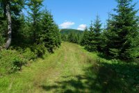 Cesta u Harrachovy skály