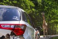 ZOO Safari - Dvůr Králové nad Labem