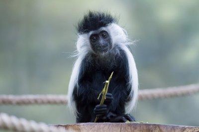 ZOO Safari Park - Dvůr Králové nad Labem und Les Království dam