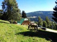 Accommodation Pension Alenka - Špindlerův Mlýn - Labská  Krkonoše