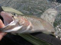 Fishing - Rybaření - Špindlerův Mlýn