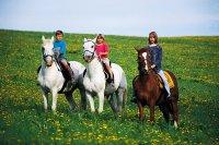 Koně - Horses - Kněžice
